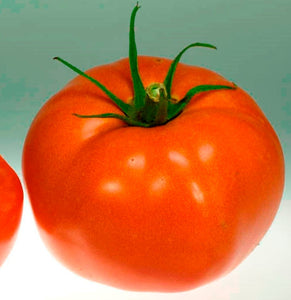 Organic Fabulous Tomato Seeds-20 Count-The name says it all, everyone's favorite, flavorful, and simple to grow tomato, All USDA Zones