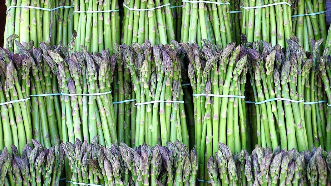 Organic Pacific 2000 Asparagus Seeds -  A Diploid Asparagus Giving Good Yields of Heavy Spears with Sweet Flavor