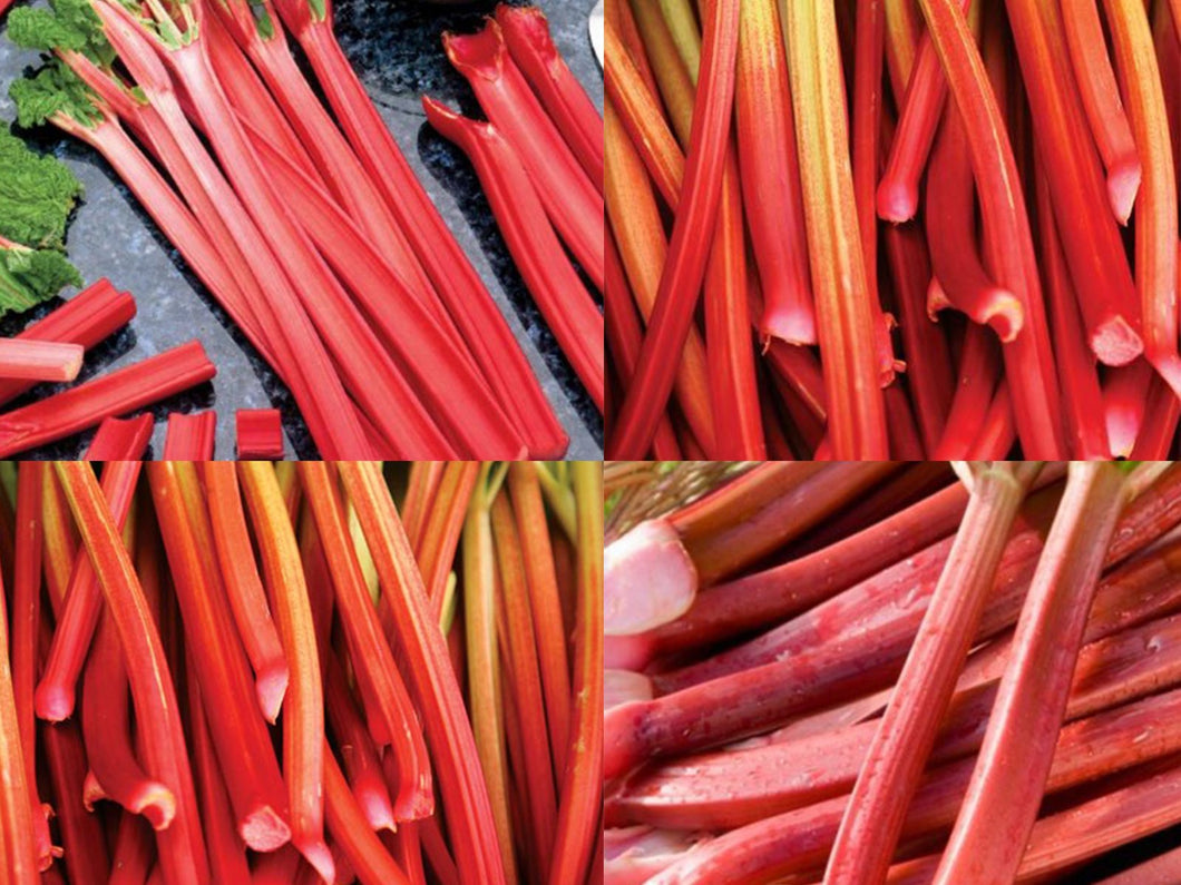 Just the Red Organic Rhubarb Please Collection - 4 Types Of Delicious Rhubarb - 15 Seeds Each