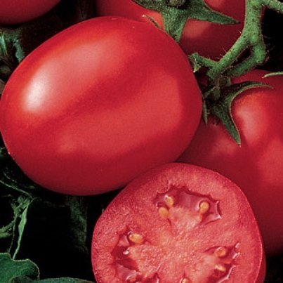 Organic Enchantment Tomato Seeds-20 Count. A favorite of every Farm Stand Owner and Shopper. Great shelf life and taste, and beautiful look