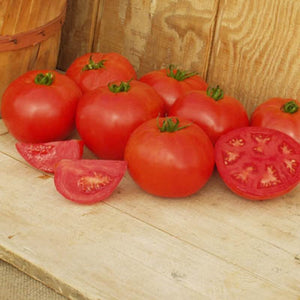 Tasty Organic Crista Tomato Seeds-20 Count. One of our most requested Organic Tomatoes. Grows in all USDA Zones. Great 1st plant for kids