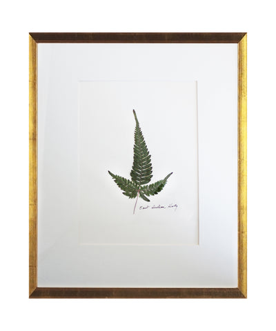 Real Pressed East Indian Holly Fern on Linen