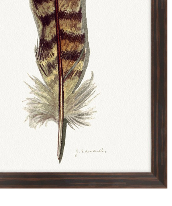 Painted Feather I