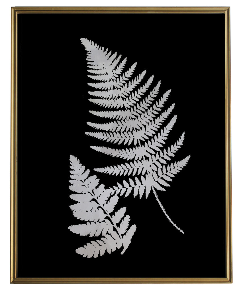 Shadow Fern Study No. 2, Brass Frame