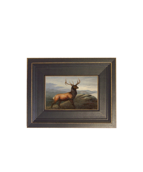 Framed Whitetail Stag Portrait
