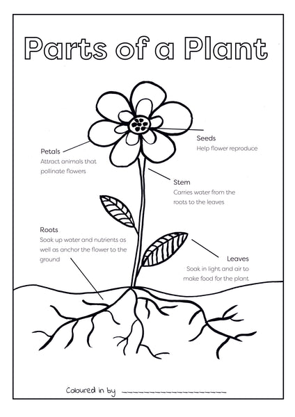 Set of 6 Colouring Printables (Download and Print & Post)