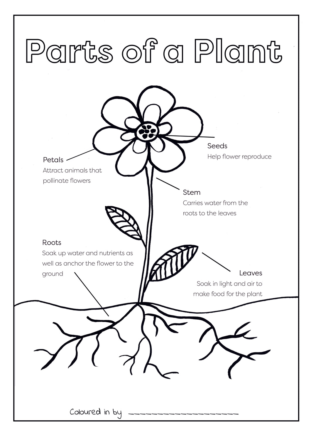 FREE Parts of a Plant Colouring Printable