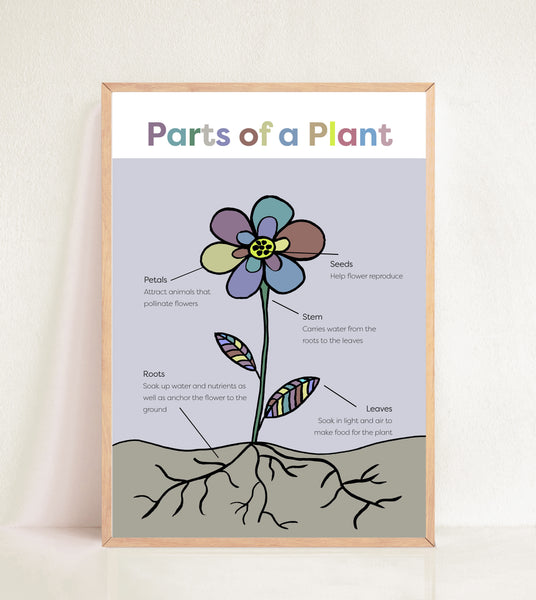 Parts of a Plant - Muted