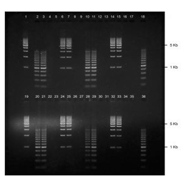 GE-3512 | 2% Agarose TAE w/ EtBr Long Gel, 2(16+2) well