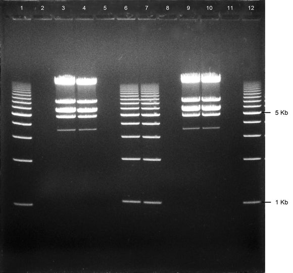 GE-4720 | 1% Agarose TBE w/ EtBr Long Gel, 12+1 well
