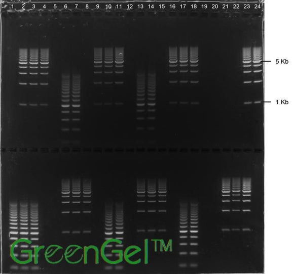 GG3631 | 0.8% Agarose TAE w/ GelGreen Long Gel, 2(24+1) well