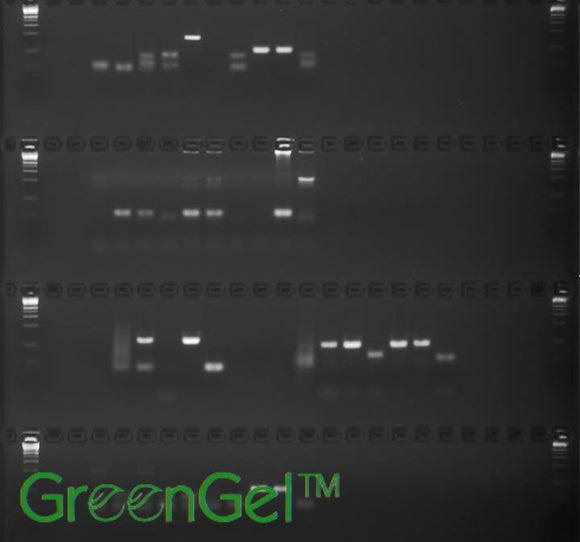 GG3642 | 2% Agarose TAE w/ GelGreen Long Gel, 4(24+1) well