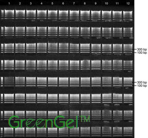 GG3670 | 1% Agarose TAE w/ GelGreen Long Gel, 8(12+1) Well