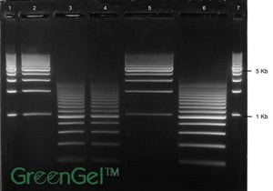 GG3690 | 1% Agarose TAE w/ GelGreen Medium Prep Gel 5+2 Well