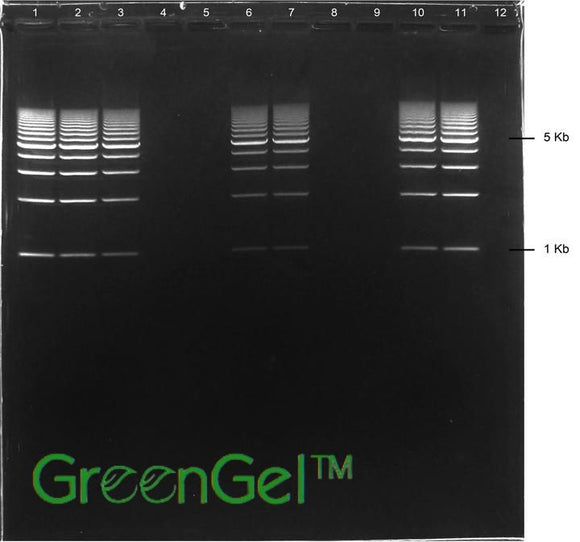 GG3724 | 1.5% Agarose TAE w/ GelGreen Long Gel 12+1 Well