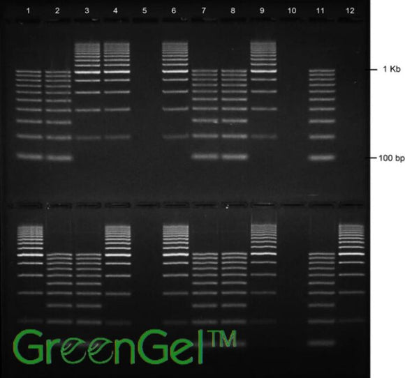 GG3732 | 2% Agarose TAE w/ GelGreen Long Gel  2(12+1) Well