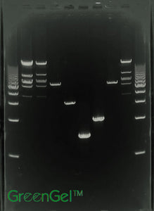 GG3870 | 1% Agarose TAE w/ GelGreen Portrait Gel 10 Well