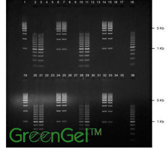 GG4510 | 1% Agarose TBE w/ GelGreen Long Gel, 2(16+2) well