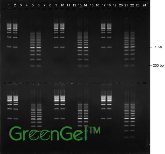 GG4630 | 1% Agarose TBE w/ GelGreen Long Gel, 2(24+1) well