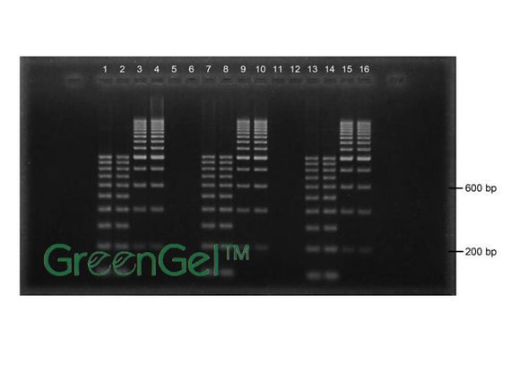 GG4542 | 2% Agarose TBE w/ GreenGel Landscape Gel, 16+2 well