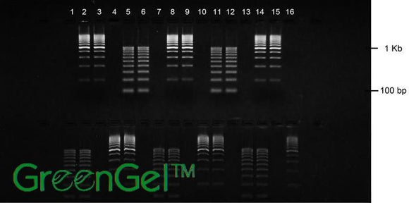 GG4552 | 2% Agarose TBE w/ GelGreen Landscape Gel, 2(16+2) well