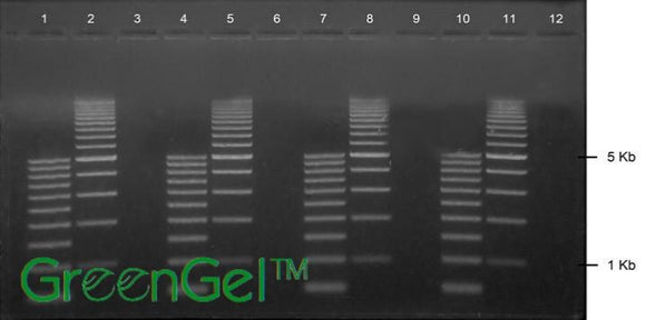 GG4600 | 1% Agarose TBE w/ GreenGel Landscape Gel, 12+1 well
