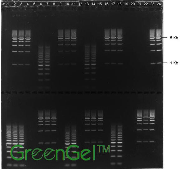 GG4633 | 3% Agarose TBE w/ GelGreen Long Gel 2(24+1) well