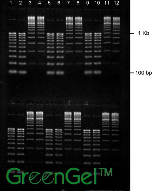 GG4712 | 2% Agarose TBE w/ GelGreen Portrait Gel 2(12) Well