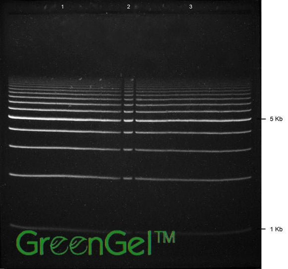 GG5200 | 1% Agarose TAE w/ GelGreen Long Prep Gel 2+1 Well