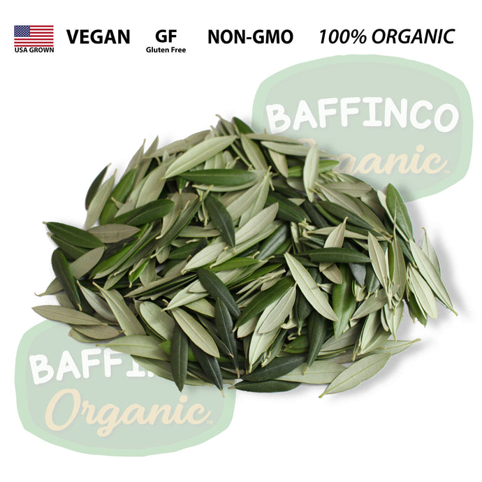 Fresh Organic Olive Leaves