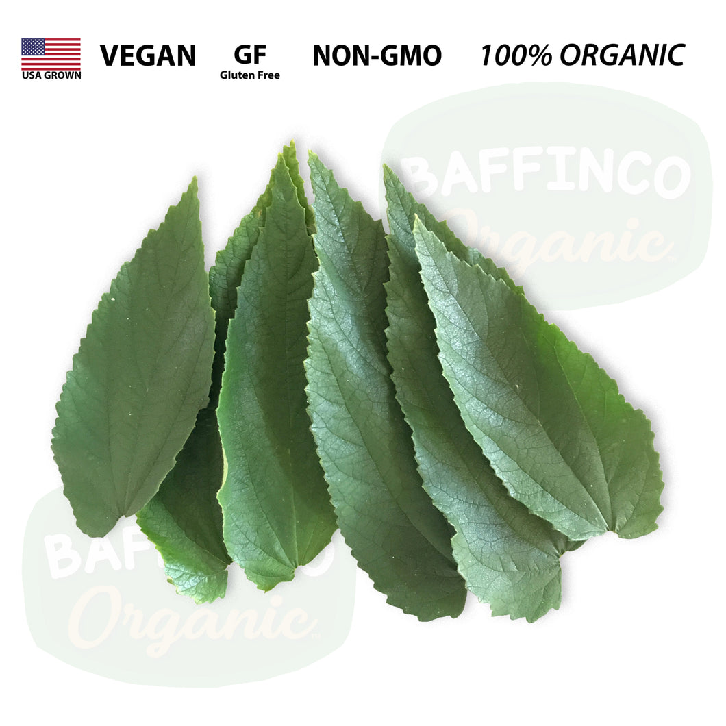 Fresh Organic Jamaica Cherry Leaves