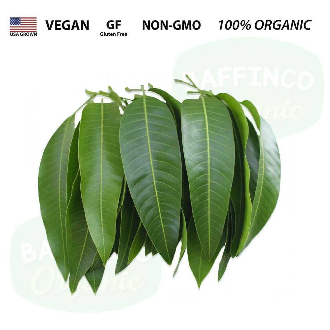 Fresh Organic Mango Leaves
