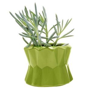 Chive Big Fang Planter