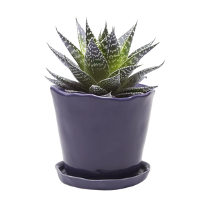 Chive Big Tika Pot