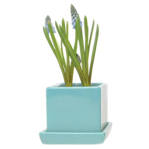Chive Cube & Saucer