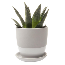 Load image into Gallery viewer, Chive Small Dyad Pot & Saucer