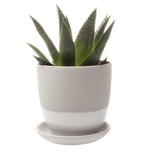 Chive Small Dyad Pot & Saucer