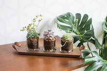 Load image into Gallery viewer, Syndicate Home & Garden Succulent Flight Planter