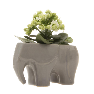 Chive Elephant Container
