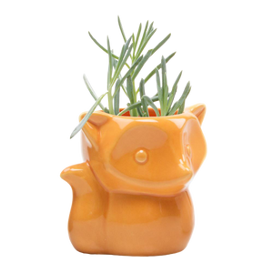 Chive Fox Container