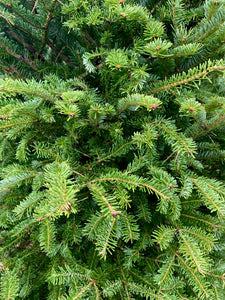 Fresh Cut Balsam Fir Christmas Trees