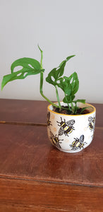 Sass and Belle Busy Bee Mini Planter Plant Pot