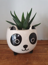 Load image into Gallery viewer, Sass and Belle Mini Panda Plant Pot