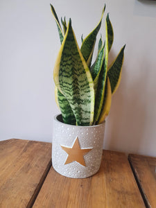 Gold Star Cement indoor plant pot
