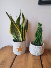 Load image into Gallery viewer, Gold Star Cement indoor plant pot
