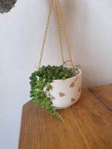 String of pearls - Senecio Rowleyanus  indoor plant 9cm