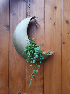 Sass and Belle Celestial Moon Hanging Planter/Plant Pot