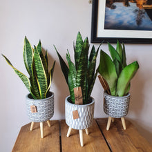 Load image into Gallery viewer, Grey Spotted Tripod Plant Pot on wooden legs - 15.5cm