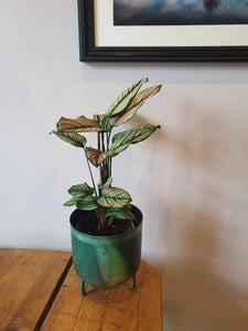 Dobra old green metal indoor plant pot