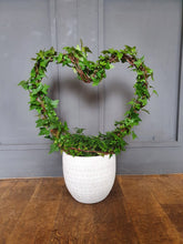 Load image into Gallery viewer, Ivy Heart - indoor or outdoor plant